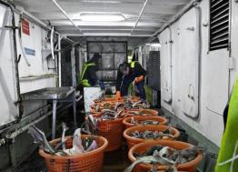 La Godaille de l'Armement de Cherbourg  met sa pêche en  ligne à partir du 6 décembre
