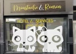 Moustache et Ronron, le nouvel hôtel pour chats de Lorient