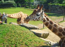In Lorient, the NGO Rewild buys the Pont-Scorff zoo