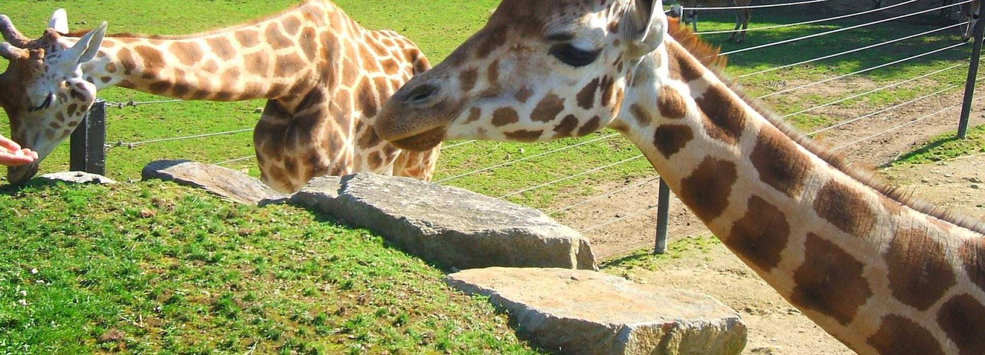 En Lorient, la ONG Rewild compra el zoo de Pont-Scorff