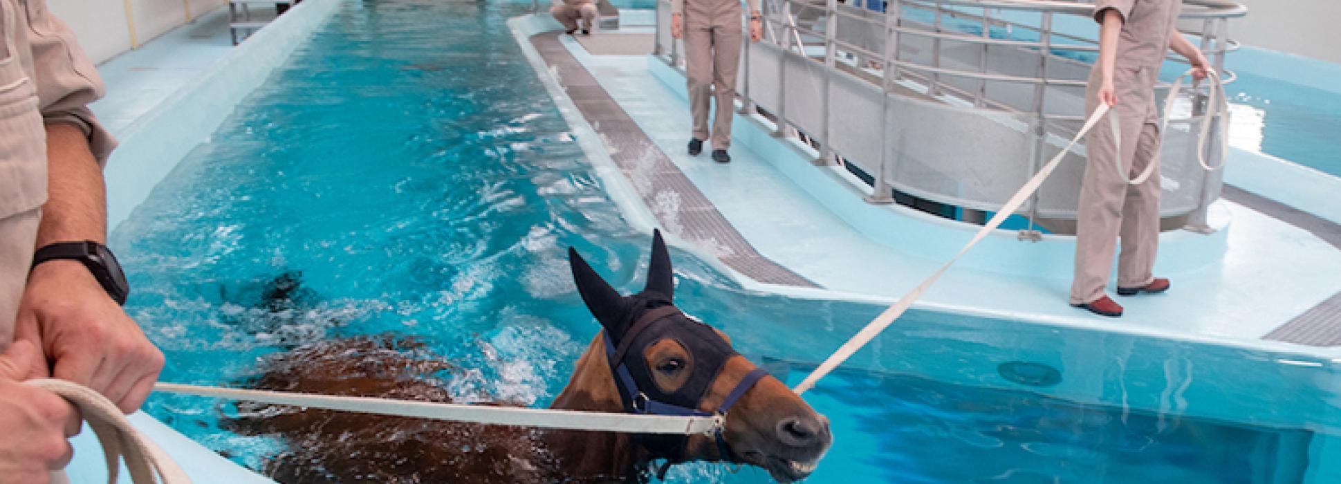 En Calvados acaba de inaugurarse KINÉSIA, el nuevo centro de fisioterapia para caballos