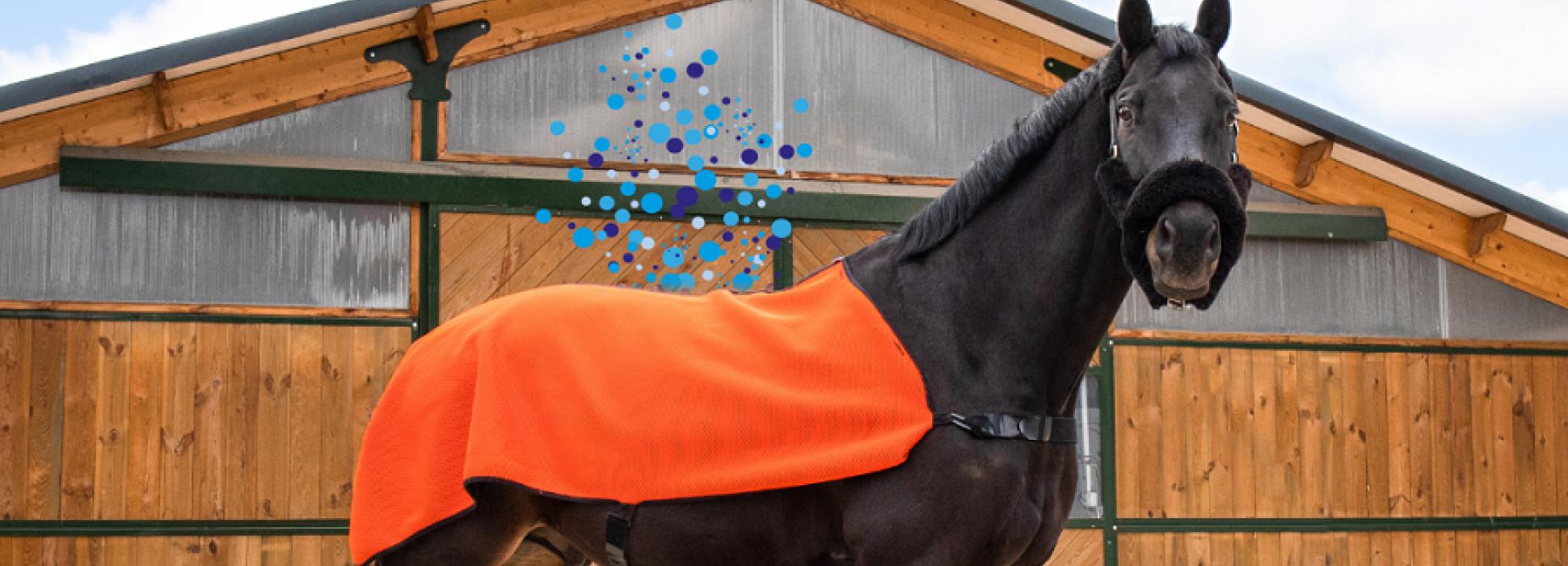 Le Cadre noir et Akhal Capsular s'associent pour le bien-être des chevaux