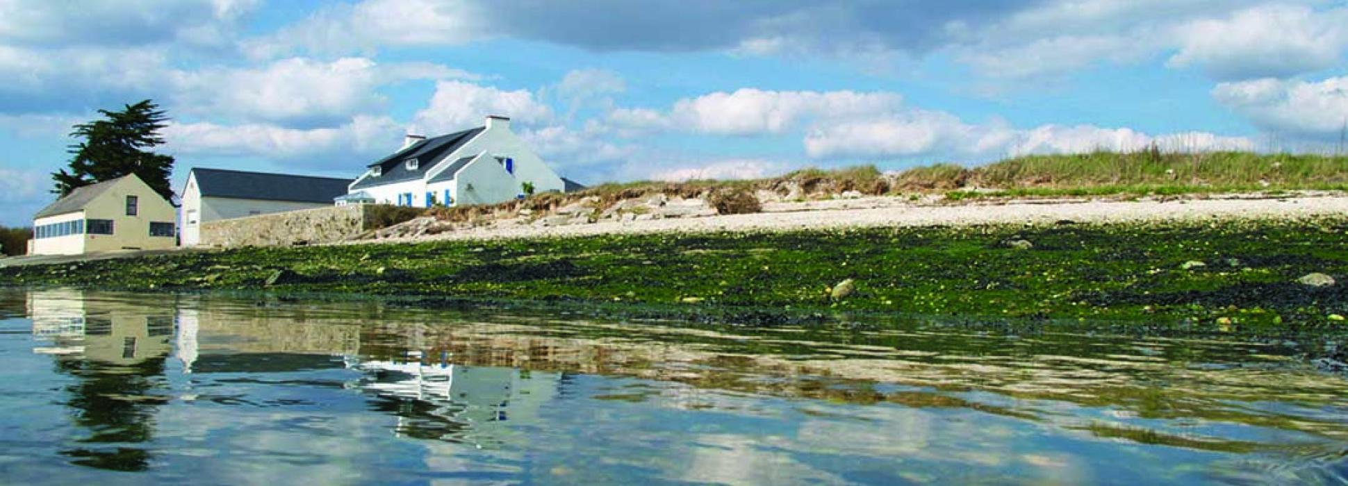 Découvrez la biodiversité près de Lorient