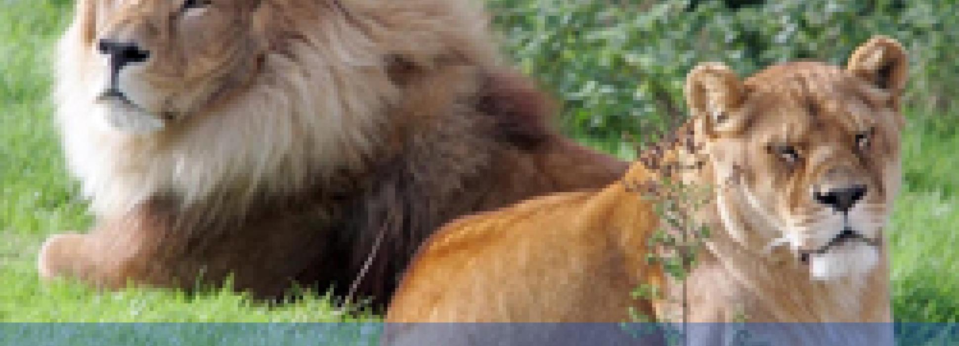 """El """"Smartpartner"""" de la semana: El zoo de Pont-Scorff de Lorient"""